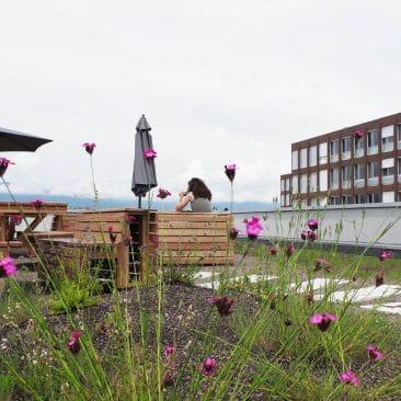Terrasse dans la végétation de la toiture végétalisée du DIP à Onex, VIMADE Architectes paysagistes.