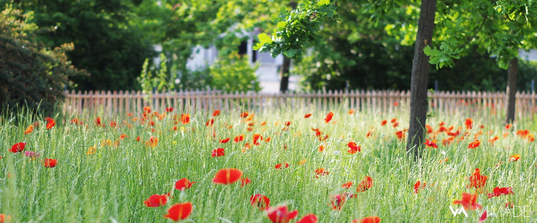 Projet du parc des Tuileries à Bellevue offrant prairies, refuge pour la faune, nature en ville, végétation indigène et espaces d'agrément, VIMADE Architectes paysagistes Genève.