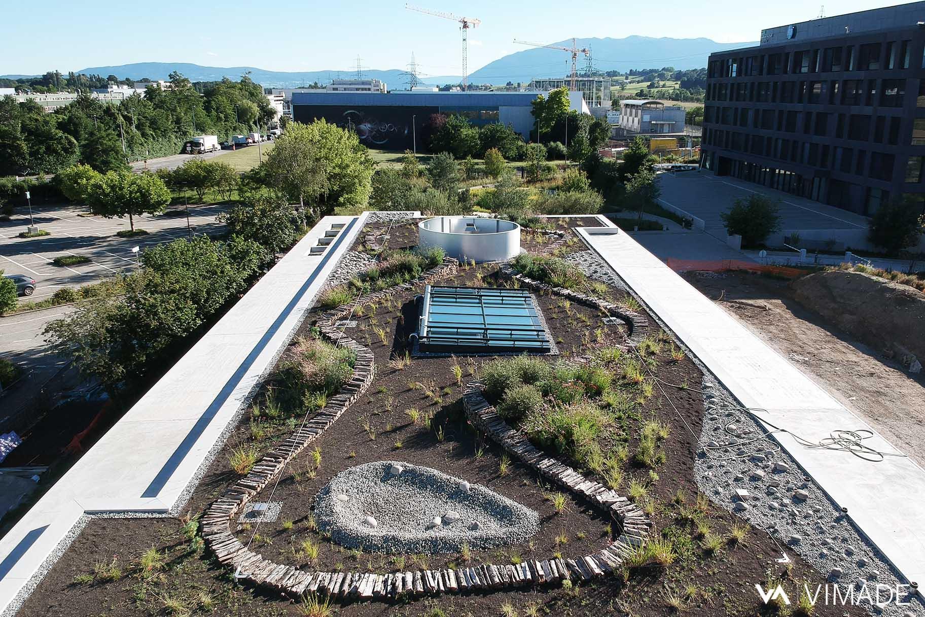 Toiture végétalisé du bâtiment Luigia du site The hive à Meyrin par le bureau VIMADE Architectes paysagistes Genève.