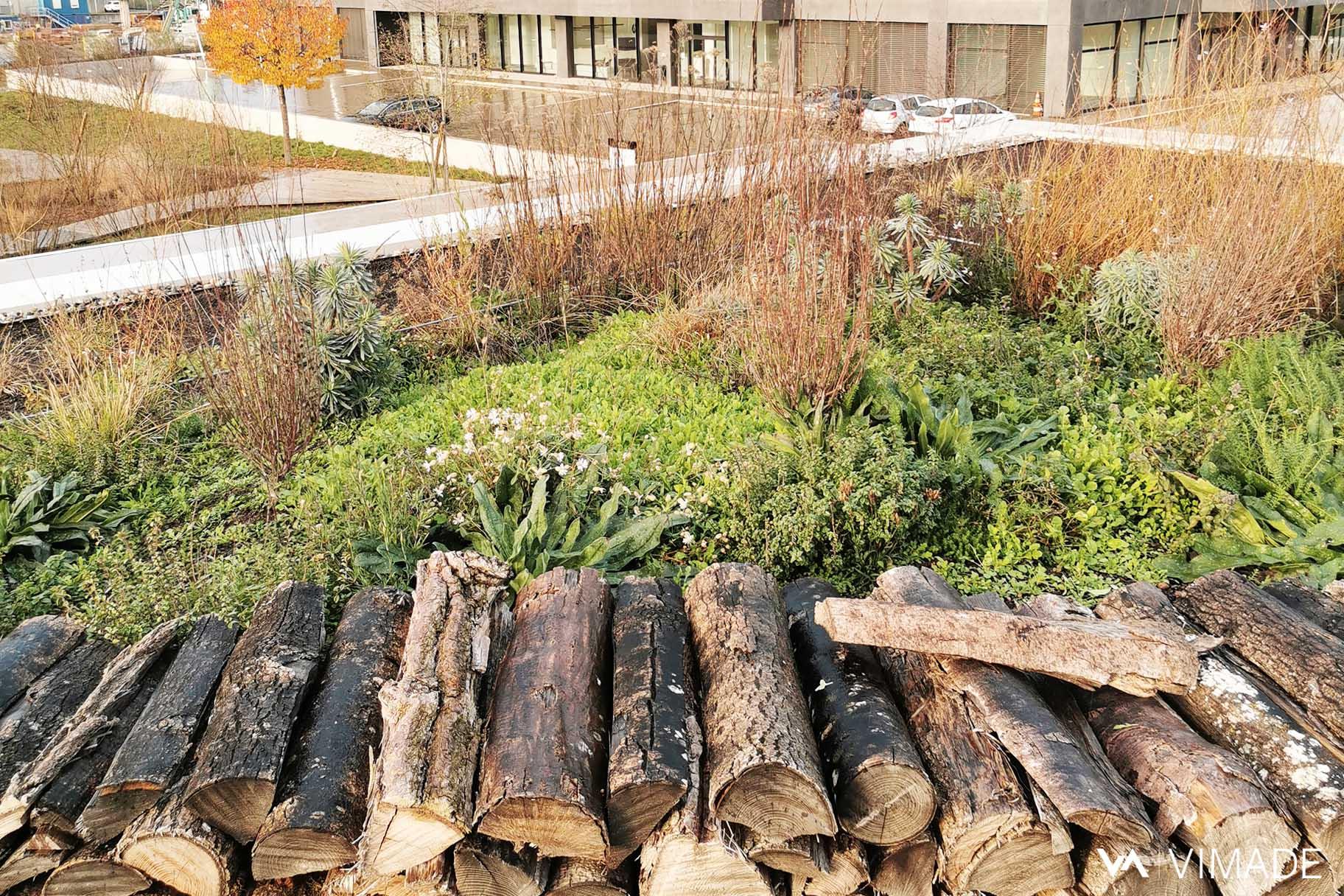 Toiture végétalisé et plantations écologiques et biodiversité, du bâtiment Luigia du site The hive à Meyrin par le bureau VIMADE Architectes paysagistes Genève.
