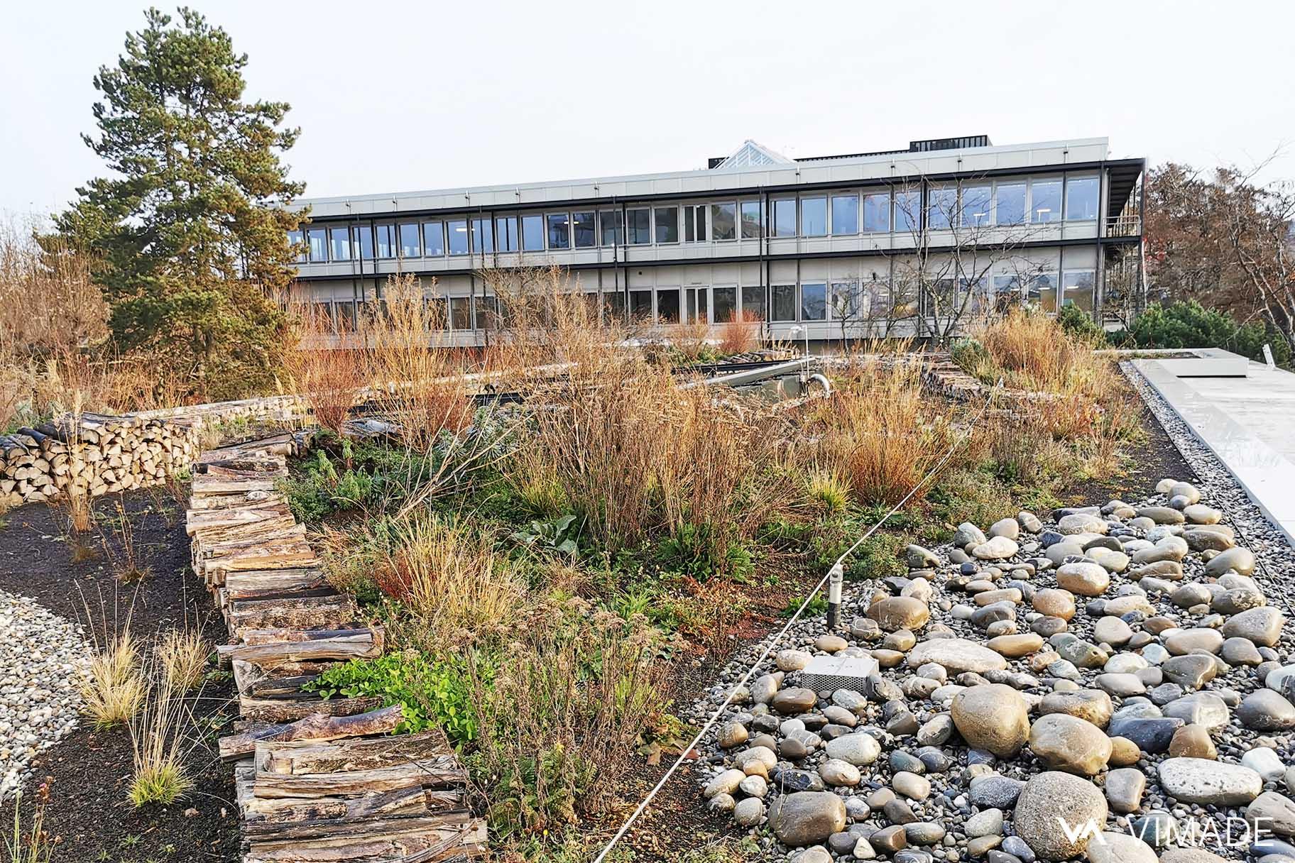 Toiture végétalisé écologique du bâtiment Luigia du site The hive à Meyrin par le bureau VIMADE Architectes paysagistes Genève.